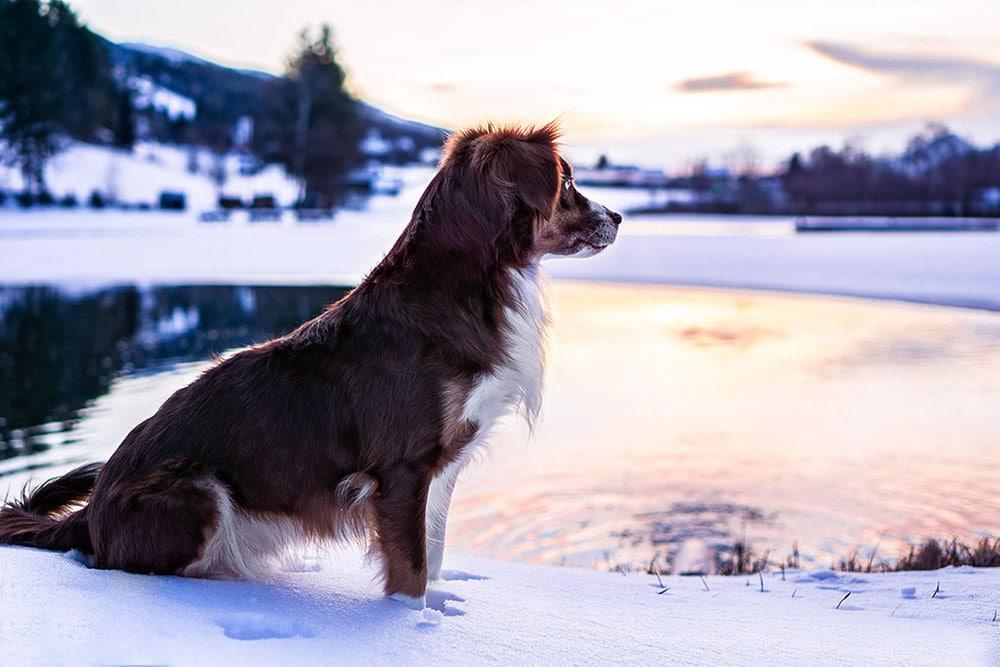 Hund-am-See