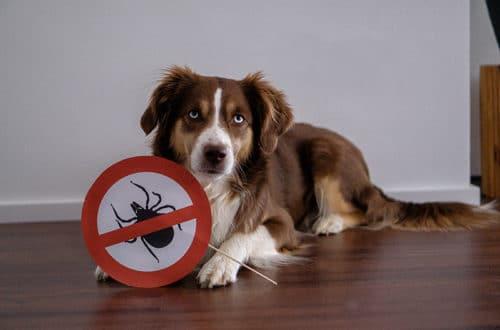 Zeckenabwehr beim Hund