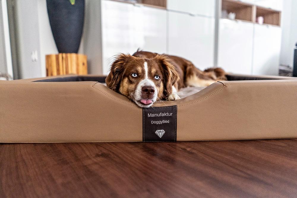 Hundebett von DoggyBed