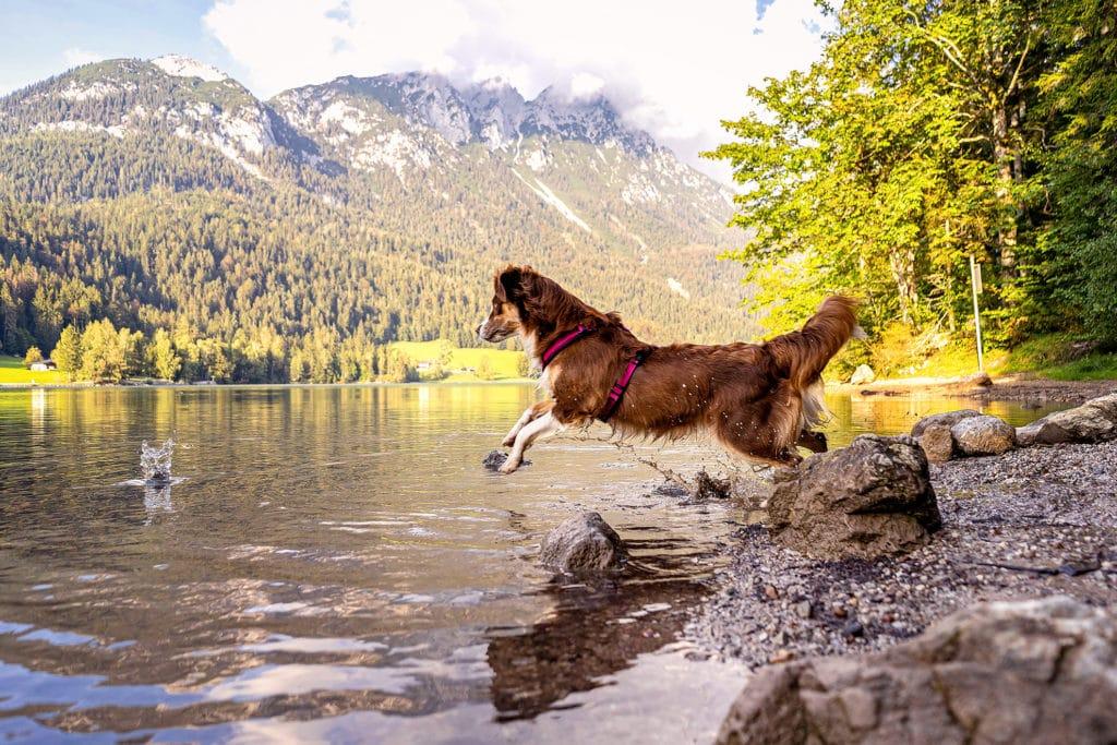 Hintersteinersee mit Hund