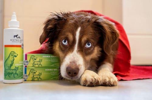 Hund mit der Pflegeserie von Ichtho Vet gegen Hautprobleme. Creme, Gel und Shampoo