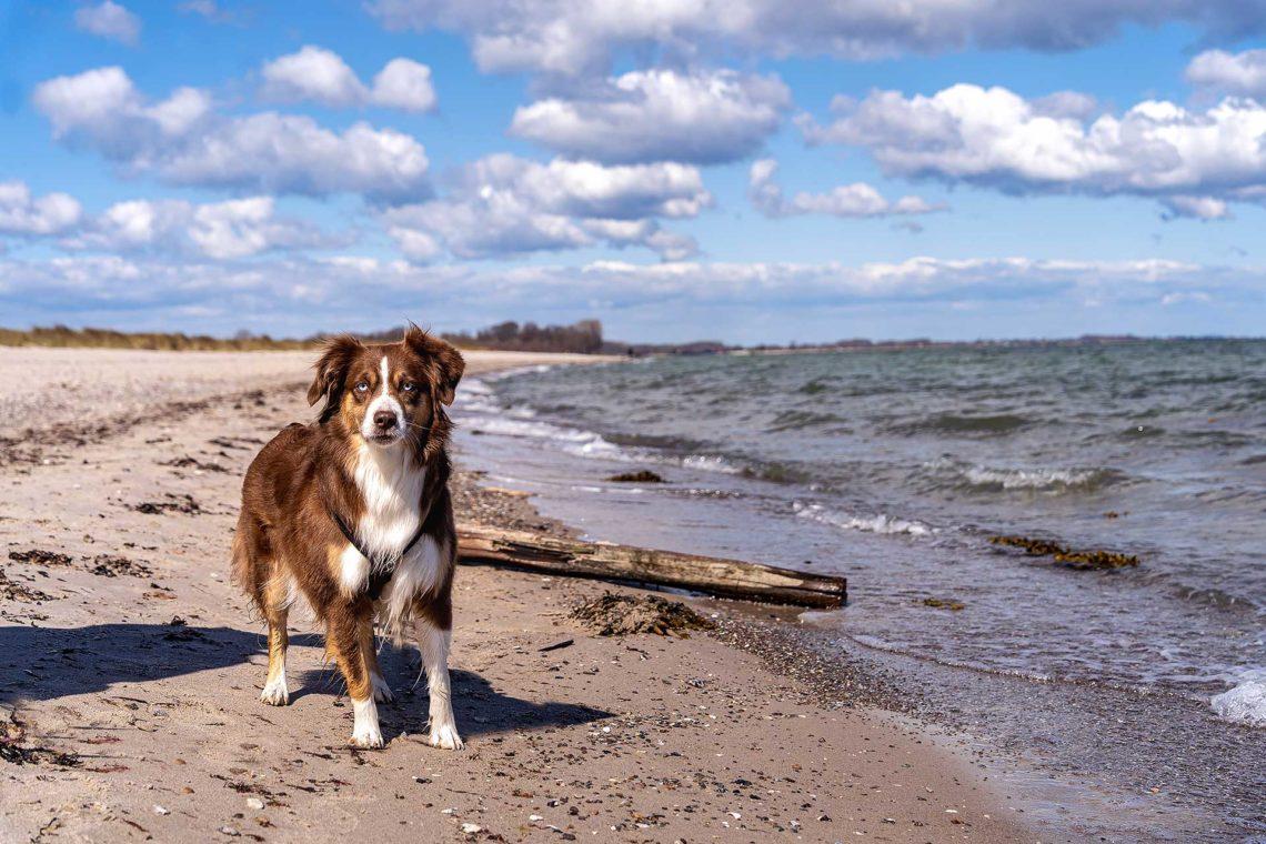 Urlaub mit Hund am Ostseefjord Schlei