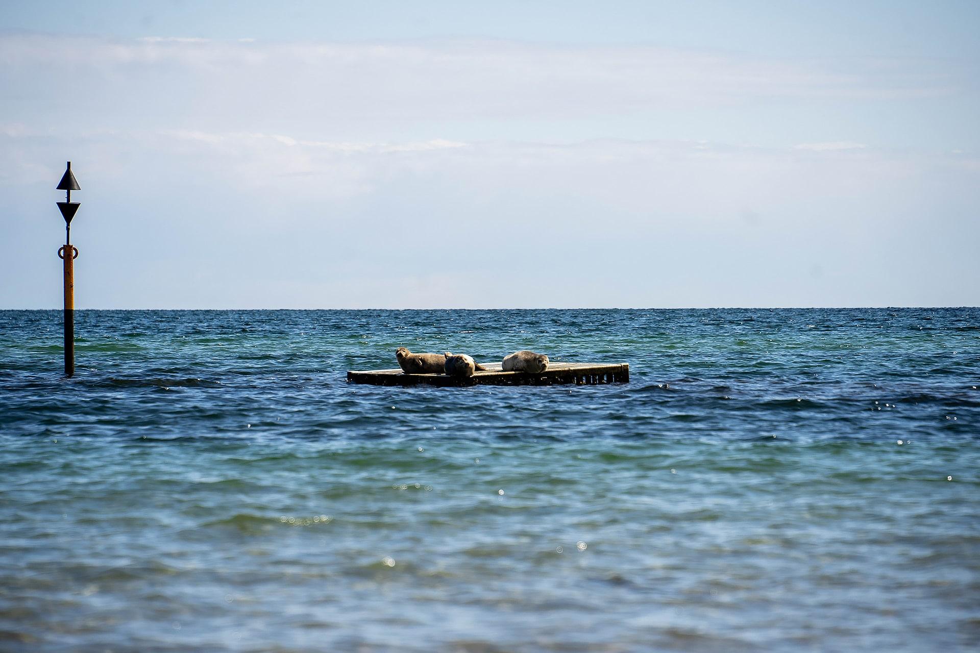 Robben in der Ostsee